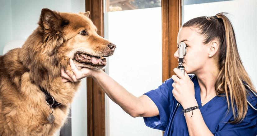 собака у ветеринара фото