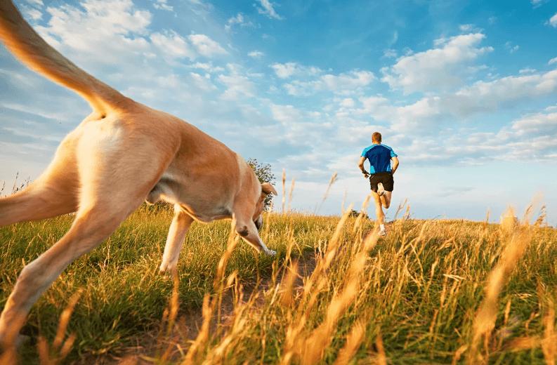 Как начать бегать с собакой?