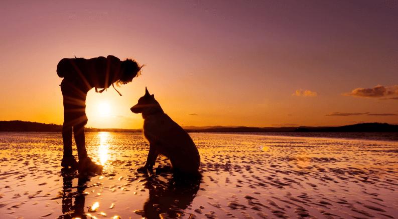 как бегать с собакой по утрам