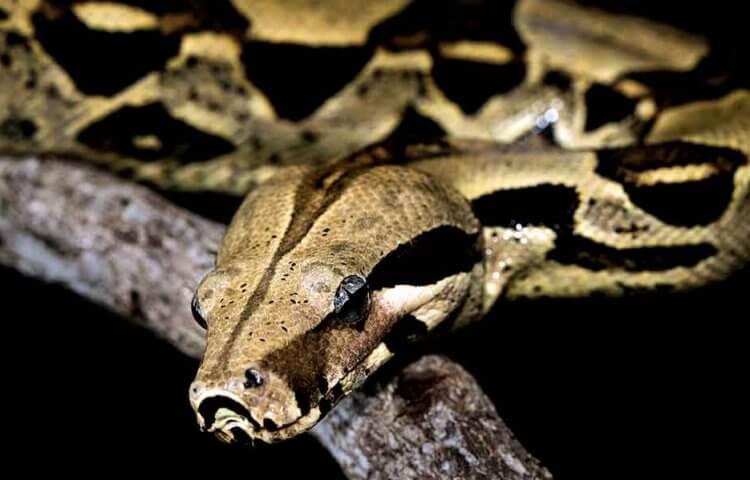 фото удава змеи