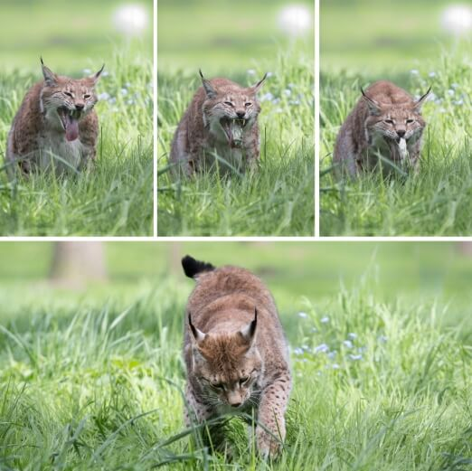 зачем кот ест траву