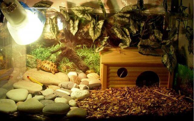 Содержание сухопутной черепахи дома