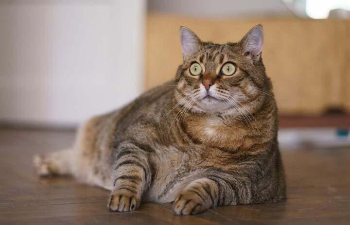 Кіт Шредінгера. Просте і коротке пояснення.